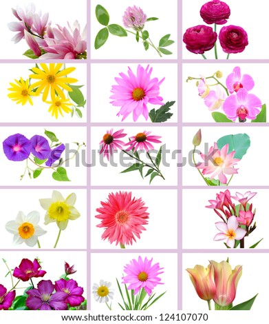 Flowers and garden collage on isolated white