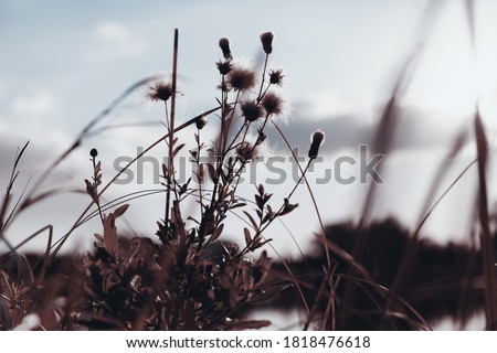 Photo of  Flowers and grass in autumn, sepia toned