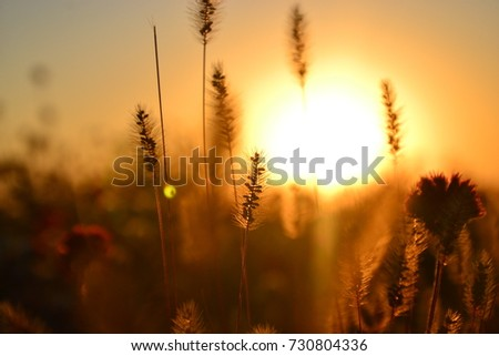 Flowers and herbs in autumn sunset