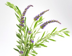 flowers and lavender leaves