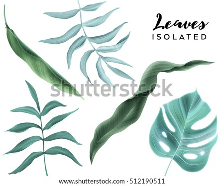 Flowers and leaves, isolated, can be used as greeting card, invitation card for wedding, birthday and other holiday and summer background.