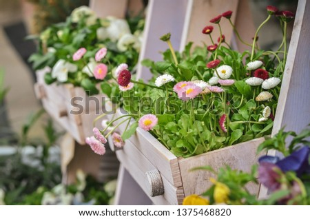Flowers and plants sold in outdoor  flower shop. Close up.  #1375468820