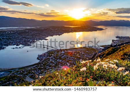 Flowers and the Midnight sun in Tromsø city from Fjellheisen