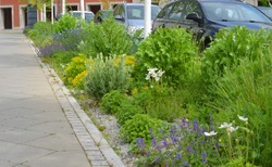 Flowers and wild plants green concept near parking lots for cars in the city