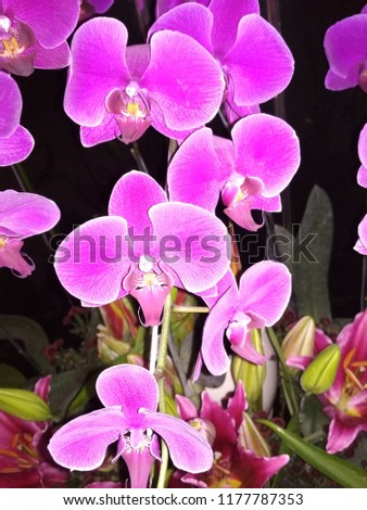 flowers  anggrek Asia #1177787353