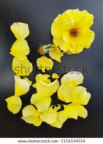 flowers annuals macro #1116144554