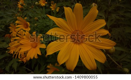 Flowers are always brightly colored, Bright yellow daisy flowers on the way.