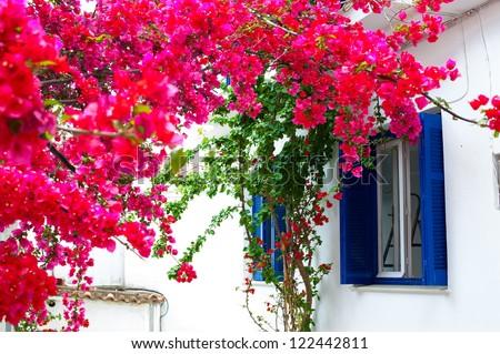 flowers around the window
