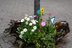 Flowers as an art object in the city center