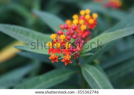 Flowers at Botanical Garden #355362746