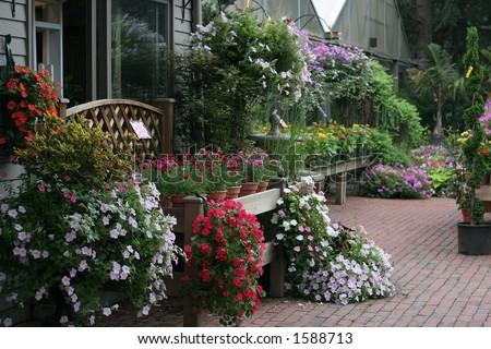 flowers at gardening store
