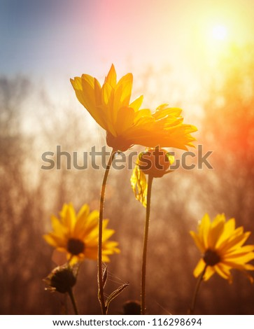 Flowers at sunrise - stock photo