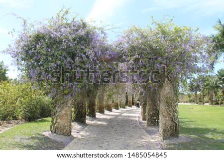 Flowers at the Naples, Botanical Garden