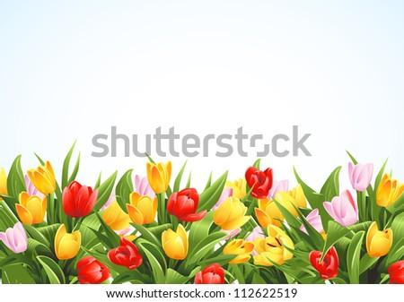Flowers background - stock photo