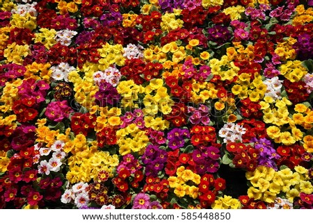 flowers background #585448850