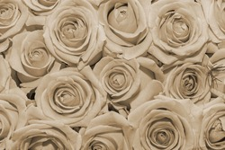 Flowers background. Close up. Sepia effect.