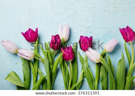 flowers background, spring tulips