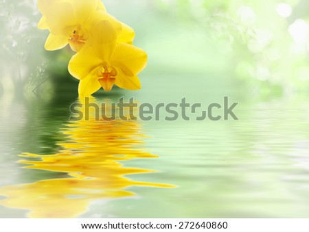 Flowers beautiful yellow orchid phalaenopsis unusual swimming in the water. Aromatherapy, relaxation for the spa