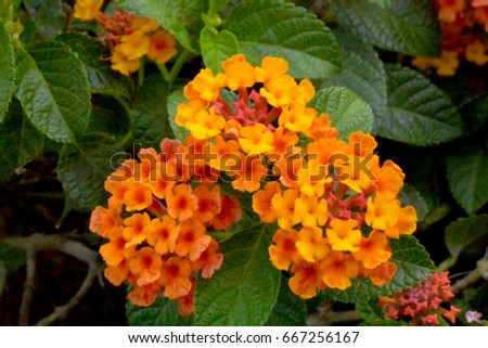 Flowers bloom orange flowers yellow flowers Beautiful bloom The best natural look It is like a background that has a sense of love