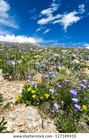 Flowers blooming in a Colorado Mountain Summer Landscape
