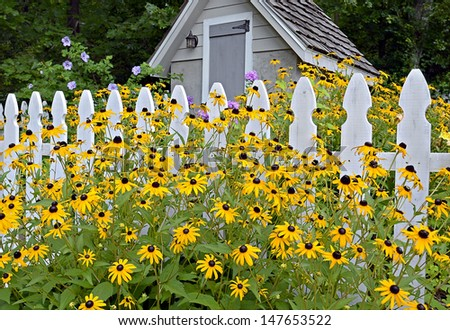 Flowers blooming in front of picket fence and garden shed.