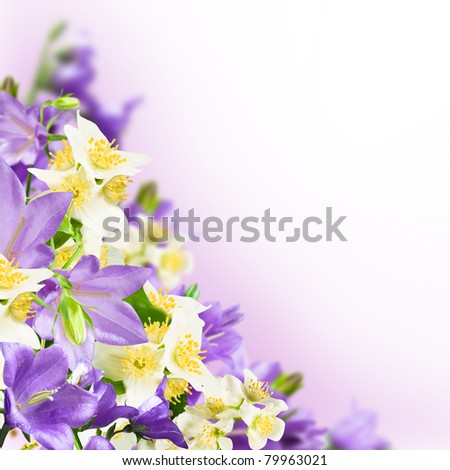 Flowers blue campanulas and white jasmine on pink white background