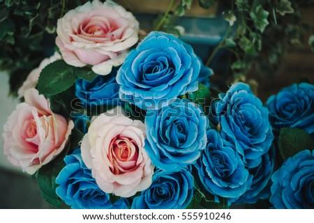Free photos blue rose flowers closeup as a background avopix flowers blue pink 555910246 mightylinksfo