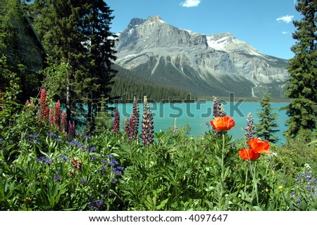 Flowers bordering Emerald lake, Yoho national park, British colombia,canada. - stock photo