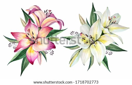 Flowers bouquets. Watercolor illustration. Lily Stock photo ©