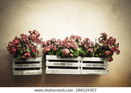 Flowers boxes hanging on the wall - Home sweet home written on wooden box - toned image