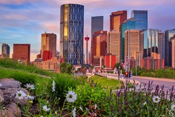 Flowers by the downtown Calgary skyline