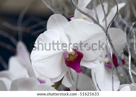 stock-photo-flowers-close-up-of-white-orchid-51625633.jpg