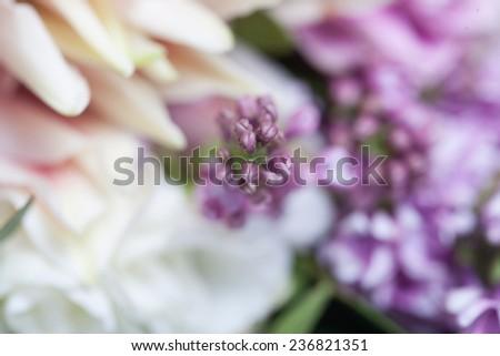 flowers closeup, macro shooting, lilac, rose, pink flowers, purple flowers, greens closeup, soft, pastel colors, pastel colors
