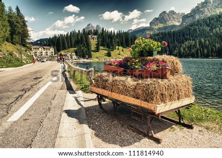 Flowers Colors of Dolomites in Summer Season, Veneto - Italy