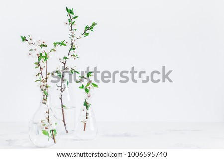 Flowers composition. Apple tree flowers in vase. Front view, copy space.