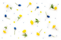 Flowers composition. Card with blue muscari and yellow flowers on white background. Flat lay, top view, copy space, mock up