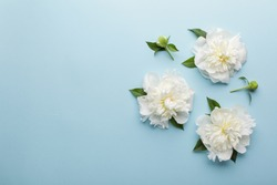 Flowers composition made of white peony flowers on blue background. Flat lay, top view.