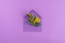 Flowers composition romantic. Yellow flowers of mimosa in an envelope on purple background. Spring floral background for greeting card. Flat lay, top view, copy space