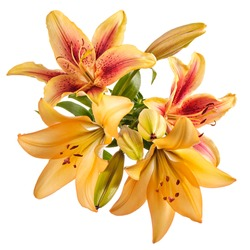 Flowers composition with lilies isolated on white background