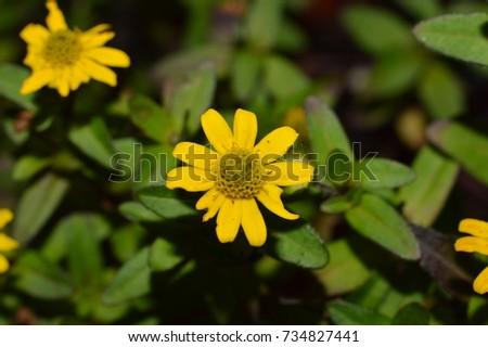 flowers details #734827441