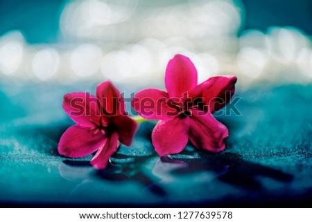 flowers flowers flowers #1277639578