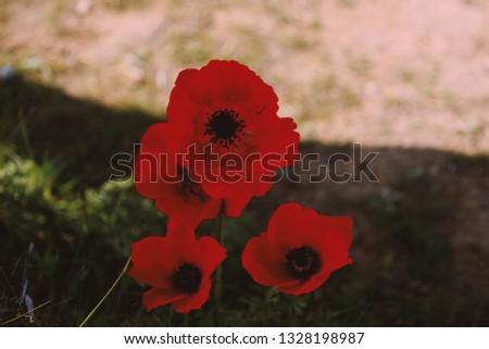 Flowers flowers flowers #1328198987