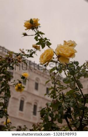 Flowers flowers flowers #1328198993