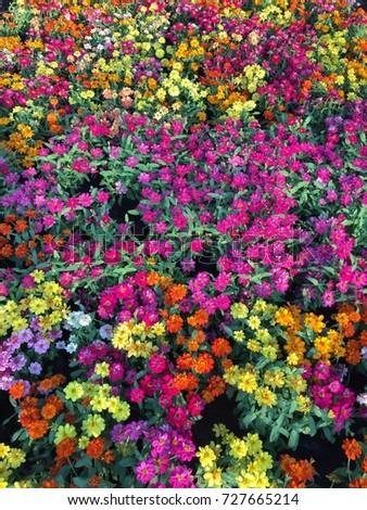 Flowers flowers flowers!!!