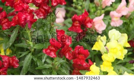 Flowers, Flowers, Flowers always Flowers #1487932463