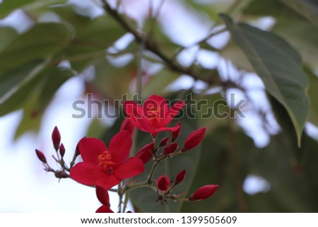 Flowers, Flowers, Flowers, Flowers, Nature #1399505609