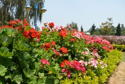 Flowers from nature and gardens of these beautiful mountain city, Dalat.