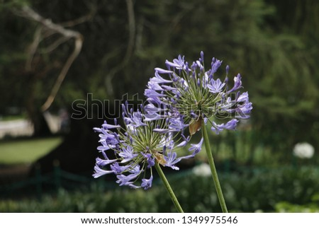 flowers  garden floral #1349975546