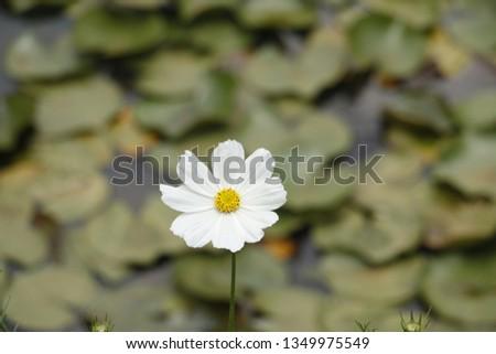 flowers  garden floral #1349975549