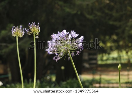 flowers  garden floral #1349975564